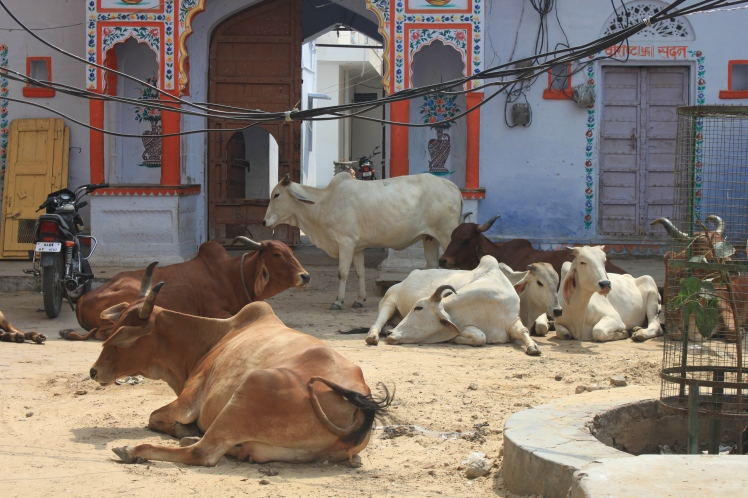 ...spme of the Pushkar locals chewing the cud ...